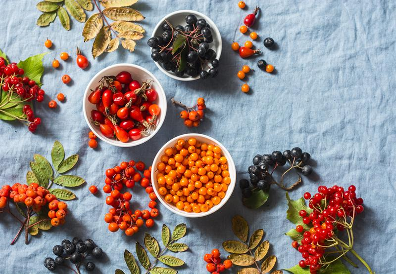 forest-autumn-berries-sea-buckthorn-ashbery-viburnum-rose-h