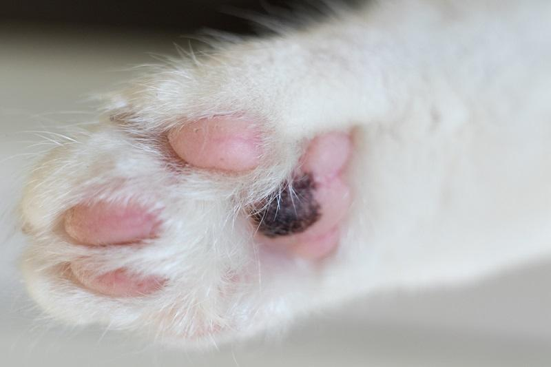 white-fluffy-cat-s-paws-with-pink-pads
