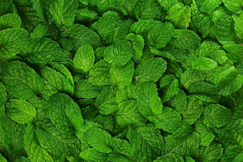 mint-leaves-background