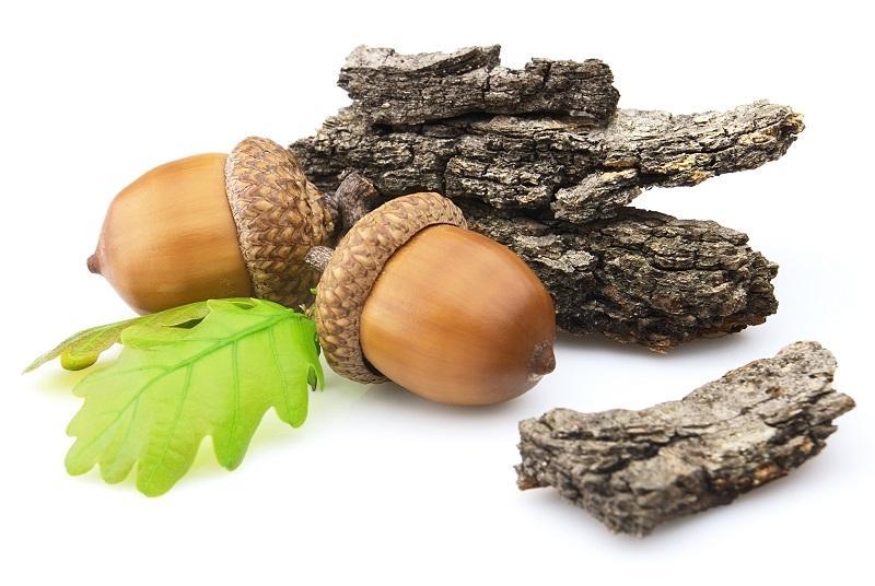 acorns-with-bark
