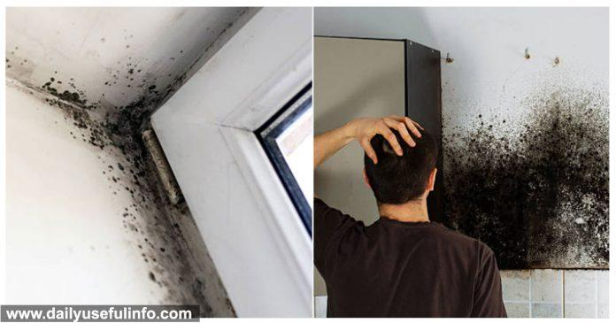 toxic-mold-symptoms-exposure-696x365-1-8858725